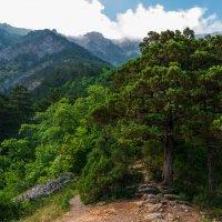 В заповедном лесу :: Андрей Козлов