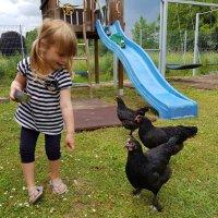 Хозяйка Птичьего Двора. Дети. :: Jakob Gardok