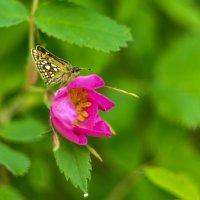 Бабочка :: Наталья Жукова