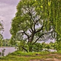 У реки :: Ольга Винницкая (Olenka)