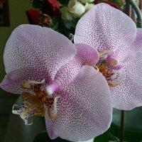 На подоконнике красуются цветы :: Galina Solovova