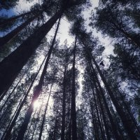 mystical forest :: Елена Елена
