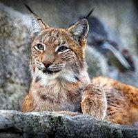 кошки бывают разными :: Олег Лукьянов