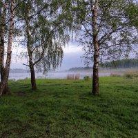 Берёзы у озера :: Денис Бочкарёв
