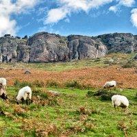 Пиренейские горы :: Георгий А