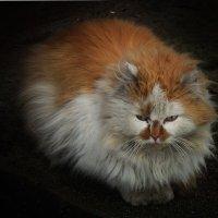 Мартовский кот :: Роман Савоцкий