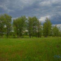 В лесу :: Олег Рыбалко