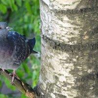 птица счастья прилетела, и в мое окно она глядела, я смотрела на нее, и мы поняли все! :: Sabina