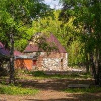 Прогулка в лесопарке 2 :: Евгений Мухин