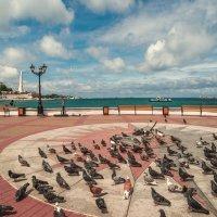Атака голубей :: Алексей Латыш