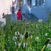 Девушка в красном :: alteragen Абанин Г.
