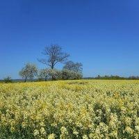 Вот и ещё одна весна пролетела... :: Людмила Торварт