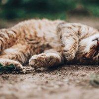 Cat :: Timetofoto