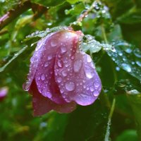 капли дождя! :: Anna-Sabina Anna-Sabina