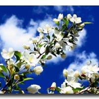 Облако в цвету, весны творение... :: Андрей Розов