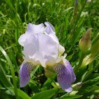 Цветы в церковном саду :: Наиля