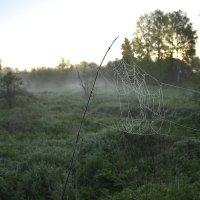 Утренний туман. :: Master