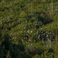 над морем зеленым, чайки парят. :: Петр Беляков