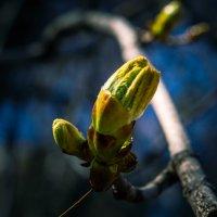 Весна в московских парках (№7) :: Absolute Zero
