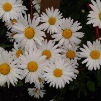 Цветы у дома! :: Ueptkm