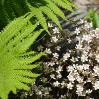 летом в саду :: Anna-Sabina Anna-Sabina