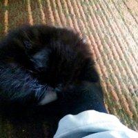 Котёнок :: Наталья (ShadeNataly) Мельник