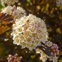 Пора цветения. :: Андрей Синицын