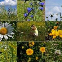 осознайте маленькие чудеса природы :: Heinz Thorns