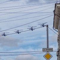 Суровые Хабаровские голуби :: Igor Volkov