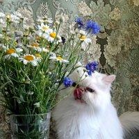 """""""Смачные"""" цветики! :: Зоя Чария"""