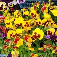 картинки с  цветочного рынка... :: Галина Флора