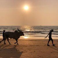 Прогулка по пляжу :: Lucky Photographer