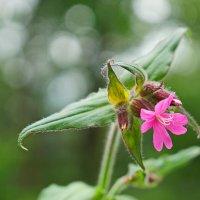 Полевые цветы... :: Анна Приходько