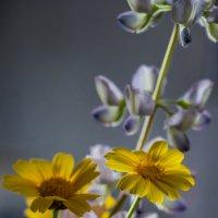 Букетик полевых цветов. :: Ефим Журбин