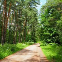 Летний лес (из поездок по области). :: Милешкин Владимир Алексеевич