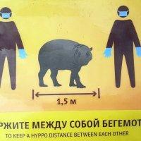 Предосторожности во время COVID-19 в московском зоопарке :: Елена
