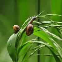 Улитки и трава :: Георгий Калиберда