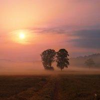 два дерева :: Elena Wymann