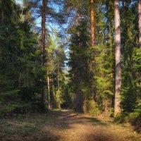 Прогулка по лесу :: Алексей (GraAl)