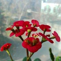 Цветочек - Зацвела на работе такая прелесть.) :: Наталья (ShadeNataly) Мельник