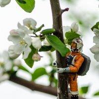 Сборщик нектара 1 :: Андрей Щетинин