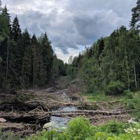 Лесные топи :: Марина Птичка