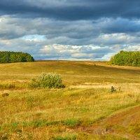 Холм .  Лес далеко . Пейзаж . :: Zefir58 Verx