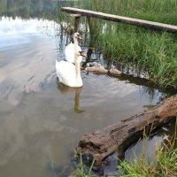 Озеро ПАРА ЛЕБЕДЕЙ :: IRIHA Ageychik