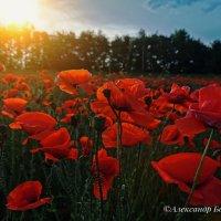 цветочки :: Александр Богатырёв