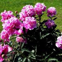Городские цветы :: Антонина Гугаева