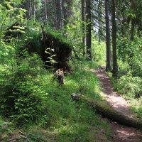 Лесными тропами :: Любовь