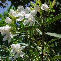 .....Цветы да небо синее... :: Варвара