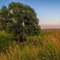 На закате июльского дня. 2 :: Андрей Дворников