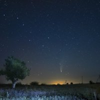 комета Neowise :: Александр Довгий
